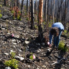 Researchers analyze species richness and diversity to inform what happens after large scale fires in the Smokies.