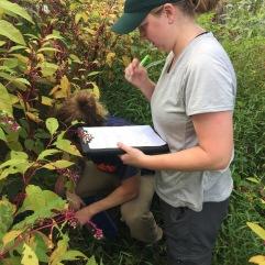 Mali Hubert catalogs plants species in burn areas of the GSMNP.