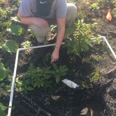 Plots from low to high burn areas were analyzed and compared.